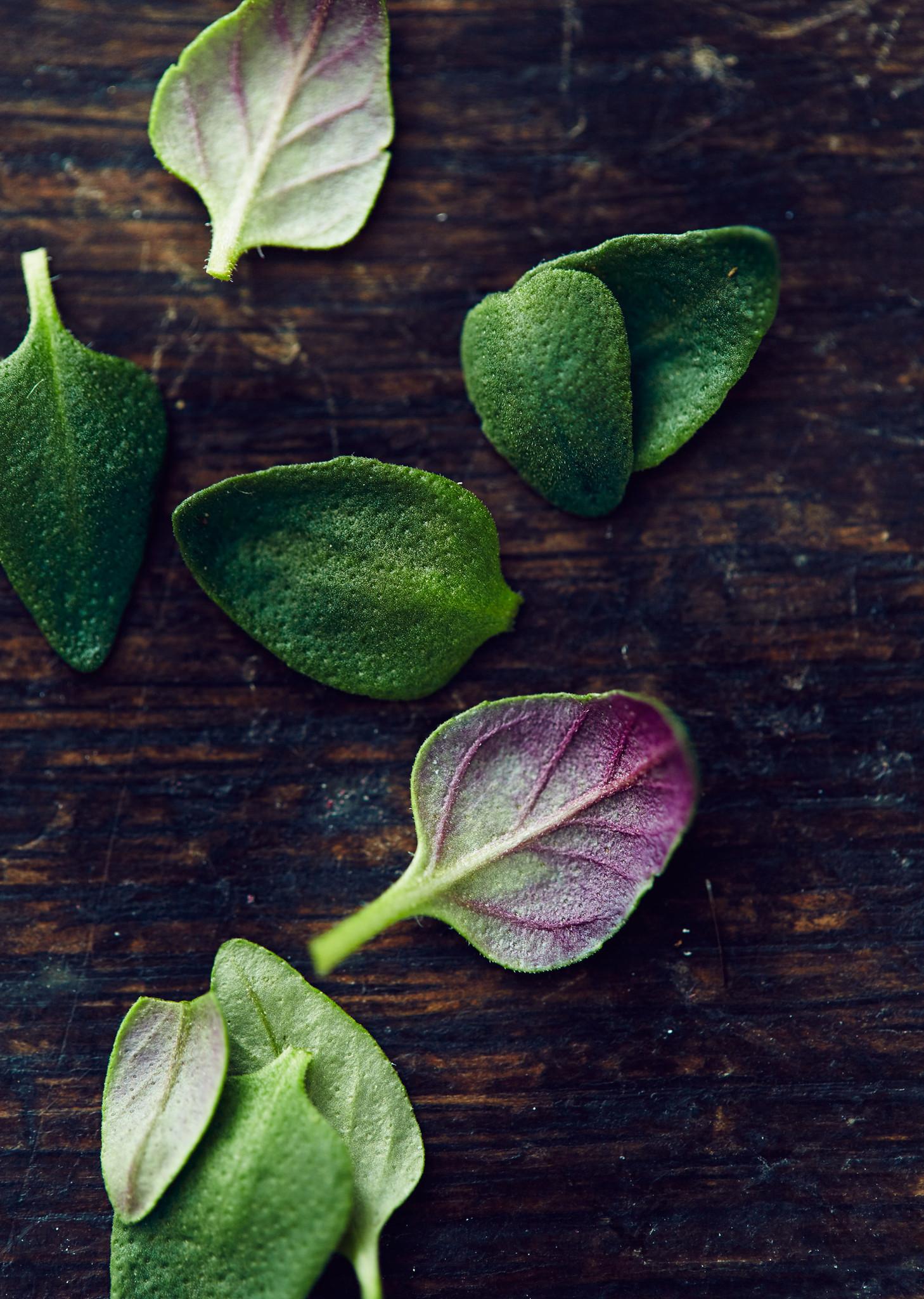 Thyme-leaf_2048x2048