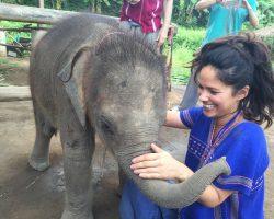 lina&elephant